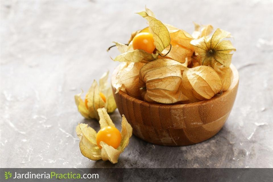 Fisalis fruto