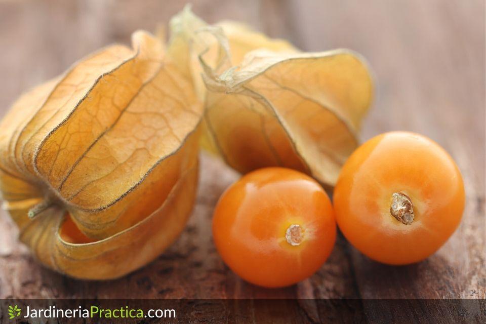 Fisalis frutos