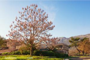 Árbol Kiri: cuidados y características