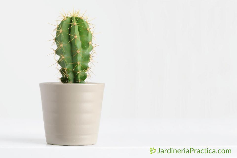 Tipos de Cactus