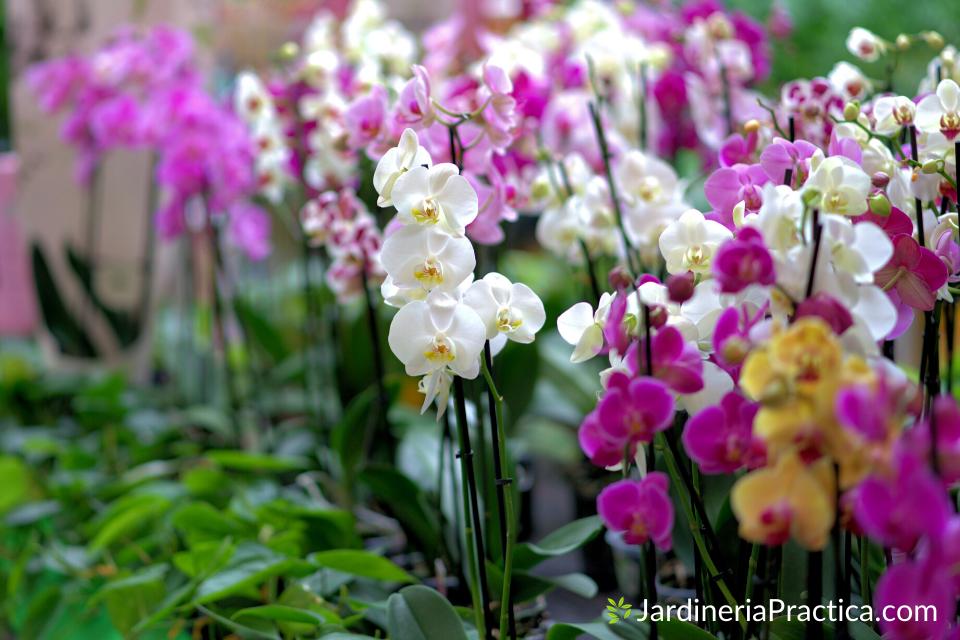 orquideas para jardin